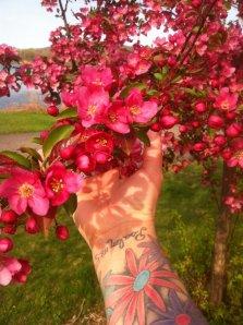 14-tree