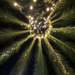 Festive palm tree