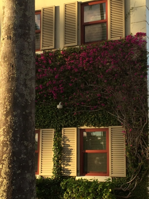 Flowers growing on a house!